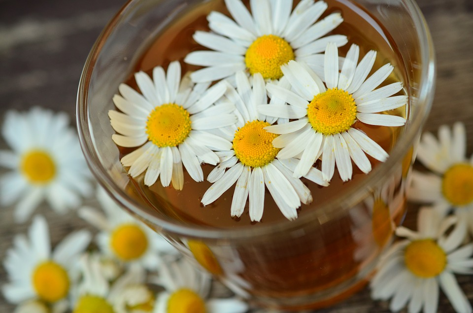 cancer fighting oils chamomile