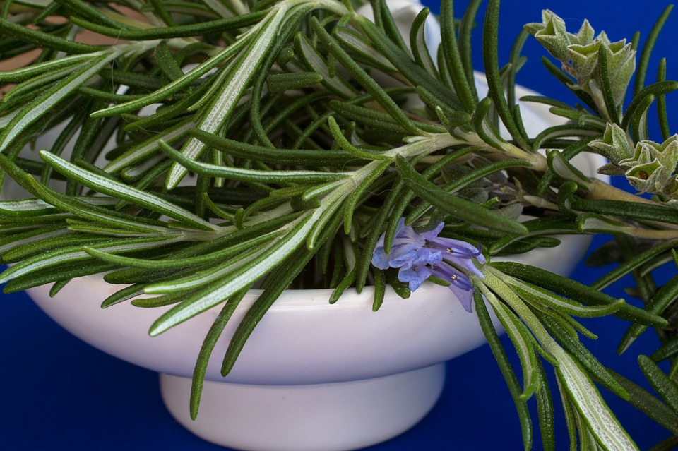 essential oil cancer rosemary